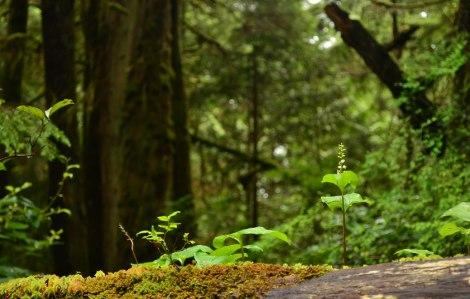 RIM PAcific Provincial Park