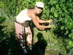 sacando_uvas