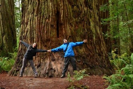redwoods_humboldt