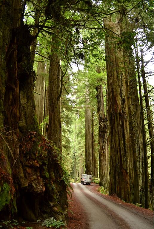 redwoods_piscola
