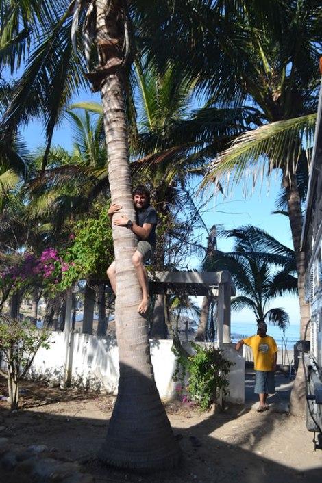 Intentando sacar cocos como los locales...