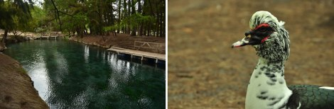 (izq) Este es un brazo de agua que sale de la Laguna de la Media Luna. (der) un pato punk nos fue a pedir comida