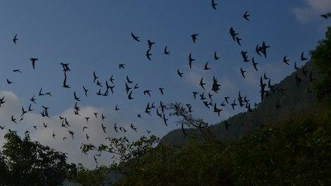 Cientos de vencejos volando hacia el sol