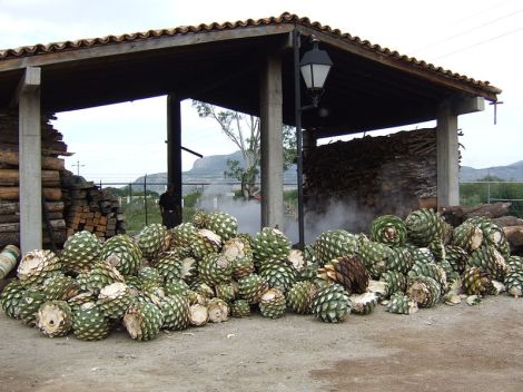 Corazones de agave para producir mezcal (Foto: commons.wikimedia.org)