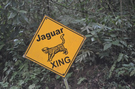 Precaución: Cruce de jaguar!... a dónde!!!???