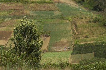 Cerros de cultivo de Zunil