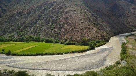 Arroceras del Valle de Utcubamba
